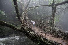 Living Root Bridge in East Khasi Hills of Meghalaya, India. Here are the year's best photos from National Geographic Travel. Ficus Elastica, Shillong, National Geographic Travel, Northeast India, Destinations, Surreal Photos, Tree Roots, Mountain Village, Bhutan