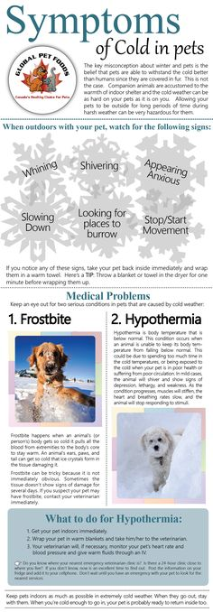 Watch out for signs that your #pet is too cold while outside in the snow and…