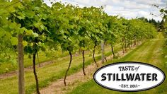 """Taste of Stillwater"" @ Saint Croix Vineyards (Stillwater, MN)    I Love..Love..LOVE all their wines"