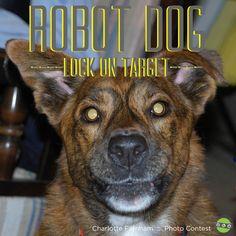 "Funny Dog Pictures! Robot Dog! ""Like"" us on Facebook"