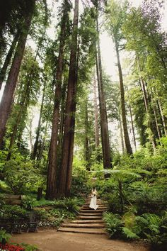 I know this is the redwoods, but does anyone know where exactly?
