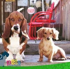 Feliz inicio de semana ☀️  #PetsWorldMagazine #RevistaDeMascotas #Panama #Mascotas #MascotasPanama #MascotasPty #PetsMagazine #MascotasAdorables #Perros #PerrosPty #PerrosPanama #Pets #PetsLovers #Dogs #DogLovers #DogOfTheDay #PicOfTheDay #Cute #SuperTiernos