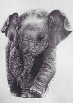 Pencil Drawing Tutorials Elephant Pencil Print - This is an inch print from an original hand drawn pencil portrait of a baby elephant. It's a great gift for any elephant lover! Baby Elephant Drawing, Elephant Sketch, Elephant Love, Elephant Art, Images Of Elephant, Geometric Elephant, Animal Drawings, Pencil Drawings, Art Drawings