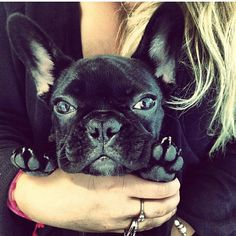 Lady Gaga's French bulldog Asia- I am MORE OBSESSED with her dog than I am with her