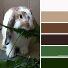 Shades Of Bunny (Photo Credit: Kaite Chase) #chasingcolor #colorthemes #colorful #shades #tones #hues #color #palette #colorpalette #colorinspiration #inspiration #creativity #art #photography #design #theme #tyrionthebunny #minilop #bunny #rabbit #rabbitsofinstagram #animal #pet #cute #fluffy #brown #green