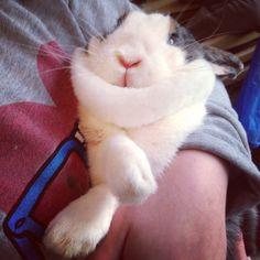 Chubby rabbit awww