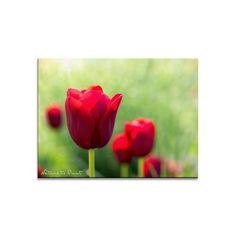 Blumenbild auf Leinwand, als Kunstdruck oder Fototapete  Rote Tulpen am Morgen