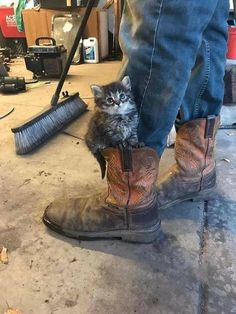 Kitty in boots … Want more cute kittens? Click the photo for more! Kitty in boots … Want more cute kittens? Click the photo for more! Cute Kittens, Cats And Kittens, Kittens Meowing, Crazy Cat Lady, Crazy Cats, Cute Funny Animals, Funny Cats, Beautiful Cats, Animals Beautiful