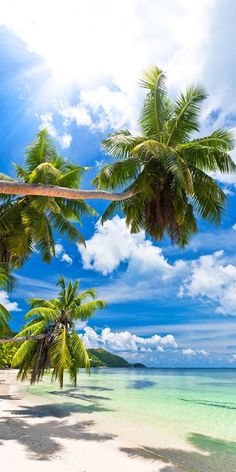 Tropical Beaches In California Beautiful Islands, Beautiful Beaches, Beautiful World, Les Seychelles, Tropical Beaches, Island Beach, Small Island, Tropical Paradise, Paradise Beaches