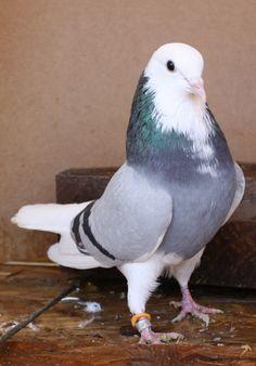 newdreckselbirds 060.JPG (752×1078)