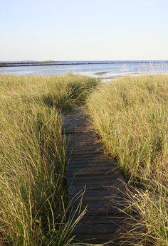 Path through the dunes . . . Biddeford Pool, Maine.