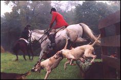 horses | Horse Border Jump wallpaper | Horsewallpapers.in