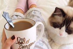 café-na-cama-com-gato
