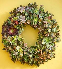 Maybe the color of my front door? I like the depth of color in this subdued yet still sunny yellow  - not too bright!  Love all the colors of the succulents and the yellow color behind!  Better Home Gardens: Succulents Wreath DIY