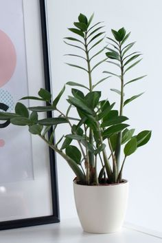 Idea Of Making Plant Pots At Home // Flower Pots From Cement Marbles // Home Decoration Ideas – Top Soop Indoor Tropical Plants, Indoor Plants Low Light, Tropical Flowers, Monstera Deliciosa, Tiny House, Zz Plant, Iron Plant, Plant Lighting, Bedroom Plants