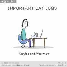 Important cat jobs: keyboard warmer Crazy Cat Lady, Crazy Cats, Cat Jokes, What Cat, Gatos Cats, Cat Comics, Photo Chat, Owning A Cat, Cat People