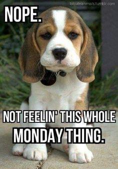 Monday puppy it's monday meme, funny monday quotes, funny weekend memes, happy monday Funny Monday Memes, Funny Quotes, Funny Memes, Memes Humor, Happy Monday Funny, Happy Monday Quotes, Humor Quotes, Monday Sayings, Happy Memes