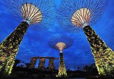 """Smart Community is... collecting both solar and water in one """"supertree"""" (Singapore) #smartcommunity"""