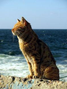 Alexandrian Cat ( via Muhammad Moneib )