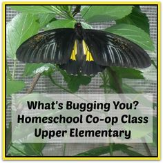 What's Bugging You? Insects Class for Homeschool Co-op
