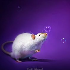 Photographer Shoots Adorable Rats In Order To Fight Against The Stigma Surrounding Rodents