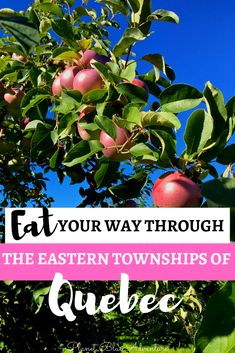 Do you love traveling for food? Then consider traveling to Quebec's Eastern Townships. Here's a guide to where to eat and drink in Quebec's Eastern Townships. Canada Travel, Travel Usa, Quebec, Of Montreal, Montreal Canada, Travel Information, Thailand Travel, Foodie Travel, Wine Country