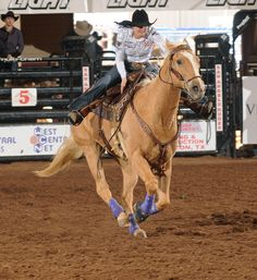Professional's Choice endorser Brittany Pozzi and duke Ride Rodeo, Rodeo Cowgirl, Rodeo Life, Reining Horses, Appaloosa Horses, Barrel Racing Horses, Barrel Horse, Westerns, Cowgirl Images