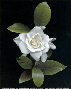 gardenia tatuaje - Buscar con Google