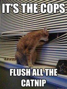 #kittyproblems