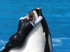 at SeaWorld you can see the love the trainers have for the whales. Really wish they would put the waterworks back in the shows!!