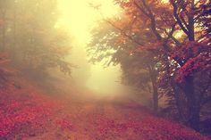 Foggy autumn morning!
