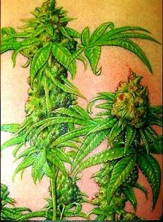 So accurate, so detailed, marijuana tattoo. Real masterpiece!  MARIJUANA - Guide to Buying, Growing, Harvesting, and Making Medical Marijuana Oil and Delicious Candies to Treat Pain and Ailments by Mary Bendis, Second Edition. Just $2.99 for great e-book! www.muzzymemo.com