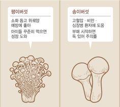' 우리가 주로 먹는 대표적인 식용 버섯에는 표고, 느타리, 팽이(팽이나무), 목이, 송이, 양송이 등이 있다. 표고버섯은 주름버섯목 느타리과에 속하며 한국, 일본, 중국 등지에 분포한다. 봄에서 가을에 걸쳐 활엽수의 고목이나 그루터기 등에 돋아나는 대표적인 식용 버섯이다. 식용으로서뿐만 아니라 약용 효과도 뛰어나