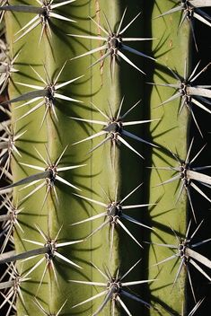 My next cactus tattoo? One of my favorite plants in one of my favorite places, Cabo. I think so...