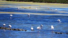 Flamencos en las Salinas de Cabo de Gata - Almería Animals, Flamingos, Gatos, Home, Animales, Animaux, Animais, Animal