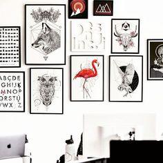 Hog Studio
