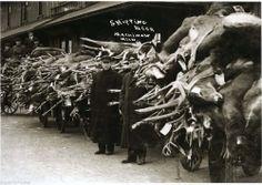 Vintage Deer Hunt Hundreds of Deer & Bear on Train Cars Mackinaw City Michigan