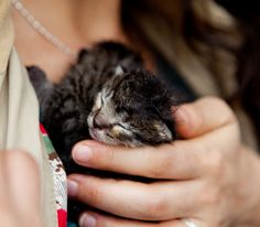 Kittens!  From Cute Overload