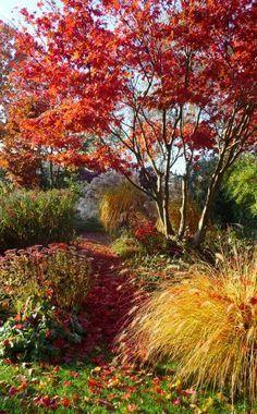 Zusammen mit Lampenputzergras (vorne) und Chinaschilf (im Hintergrund) lässt der Fächerahorn den Garten in den schönsten Farben erstrahlen