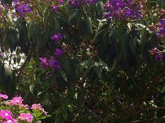 Epcot #5GeeksInWDW #disney Flowers