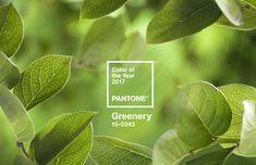 Pantone anuncia a cor de 2017: o verde Greenery  Tom traz simbolismo de recomeço e reforça conexão com a natureza