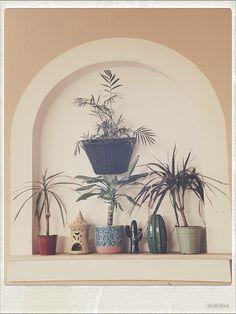 Balcony plants and pots