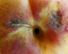 Apricot 1