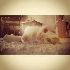 El es Matias, una de mis mascotas y me ayuda a desestresarme para continuar luego con mi labor frente al pc. Labor, Cats, Animals, Pet Photography, Gatos, Animales, Animaux, Animal, Cat