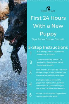 Puppy Dog Training: The First 24 Hours With a New Puppy