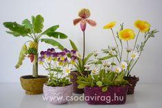 Clay Flowers, Plants, Porcelain, Creative, Porcelain Ceramics, Plant, Planets, Tableware