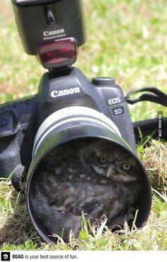 In Kamera