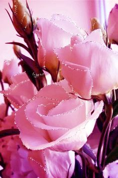 New ideas wallpaper rose posts Roses Gif, Flowers Gif, Beautiful Rose Flowers, Beautiful Gif, Love Rose, Trendy Wallpaper, Flower Wallpaper, White Roses, Pink Roses