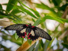 Black Red Tan by Pat Kofahl on 500px
