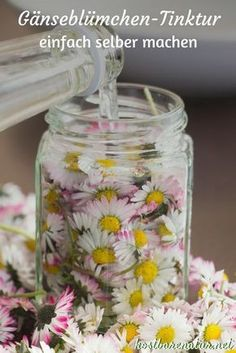 Daisy tincture - for acne, blackheads and blemished skin .- Gänseblümchen-Tinktur – gegen Akne, Mitesser und unreine Haut – Kostbare Natur The daisy contains many valuable ingredients that you can preserve in a tincture and use all year round. Diy Beauté, Natural Cosmetics, Natural Remedies, Beauty Makeup, Herbalism, Beauty Hacks, Beauty Tips, Beauty Care, Beauty Products